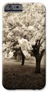 Waiting For Sunday - Holmdel Park IPhone Case by Angie Tirado