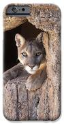 Watchful Eyes IPhone 6s Case by Sandra Bronstein