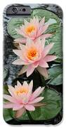 Water Lily Trio IPhone Case by Sabrina L Ryan