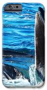 Whale's Opening Mouth IPhone Case by Paul Ge