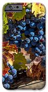 Wine Grapes Napa Valley IPhone 6s Case by Garry Gay