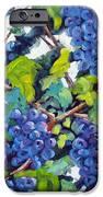 Wine On The Vine IPhone Case by Richard T Pranke