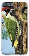 Woodpecker IPhone Case by RB Davis