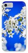 Cherry Blossom With Blue Sky IPhone Case by Raimond Klavins