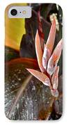 Canna Lilies IIi  IPhone Case by Kirsten Giving