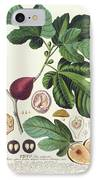 Fig Engraved By Johann Jakob Haid  IPhone Case by German School