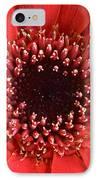 Gerbera Daisy Flower IIi IPhone Case by Natalie Kinnear