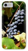 Grape Harvest IPhone Case by Neal  Eslinger