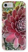 Hens And Chicks IPhone Case by Sholeh Mesbah