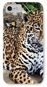 Leopard At Rest IPhone Case by Marty Koch