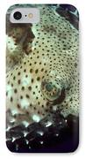 Porcupinefish IPhone Case by Gregory G. Dimijian