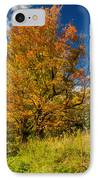 Sugar Maple 3 IPhone Case by Steve Harrington