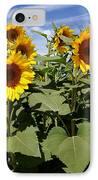 Sunflower Field IPhone Case by Kerri Mortenson