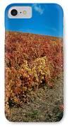 Vineyard In Negotin. Serbia IPhone Case by Juan Carlos Ferro Duque