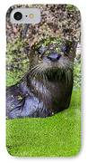 Young River Otter Egan's Creek Greenway Florida IPhone Case by Dawna  Moore Photography