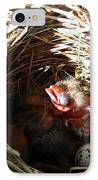 Red-winged Blackbird Babies And Egg IPhone Case by J McCombie