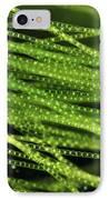 Spirogyra Algae, Light Micrograph IPhone Case by Jerzy Gubernator