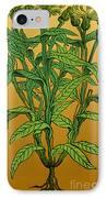 Centaurea Montana, Bachelors Button IPhone Case by Science Source