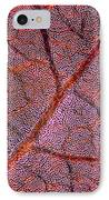 Leaf Anatomy, Light Micrograph IPhone Case by Dr Keith Wheeler