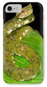Eyelash Viper IPhone Case by Dante Fenolio