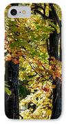 Dazzling Days Of Autumn IPhone Case by Will Borden