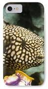 Juvenile Map Pufferfish IPhone Case by Georgette Douwma