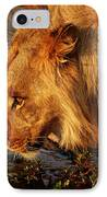 Lion's Pride IPhone Case by Andrew Paranavitana