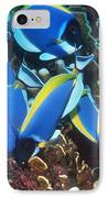 Powderblue Surgeonfish IPhone Case by Georgette Douwma