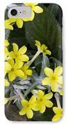 Primula Verticillata Flowers IPhone Case by Bob Gibbons