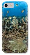 Reticulate Humbugs Gather Under Stone IPhone Case by Steve Jones