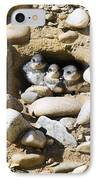 Sand Martins IPhone Case by Duncan Shaw