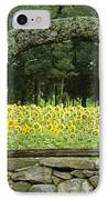 Sunflowers 1 IPhone Case by Ron Smith