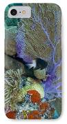 A Bi-color Damselfish Amongst The Coral IPhone Case by Terry Moore