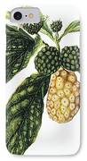 Noni Fruit IPhone Case by Hawaiian Legacy Archive - Printscapes