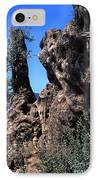 Olive Tree 2000 Years Old IPhone Case by Thomas R Fletcher