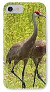 Sandhill Crane Family IPhone Case by Carol Groenen