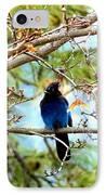 Stellar Jay Majesty IPhone Case by Will Borden