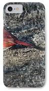 Winter Redbird IPhone Case by Douglas Barnett