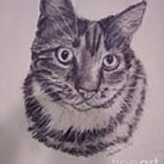 Pet Portraits  Poster by Lucia Grilletto