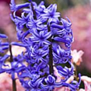 Hyacinth Garden Poster by Frank Tschakert
