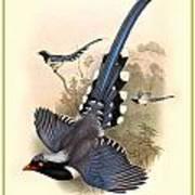John Gould Birds Poster by Gary Grayson