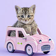 Kitten In Pink Car Poster by Greg Cuddiford