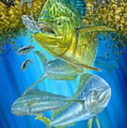 Mahi Mahi Hunting In Sargassum Poster by Terry  Fox