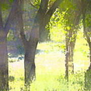 Oaks 25 Poster by Pamela Cooper