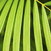 Palm Tree Leaf Poster by Elena Elisseeva