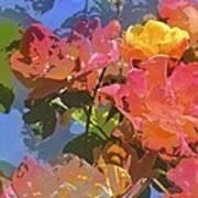 Rose 208 Poster by Pamela Cooper