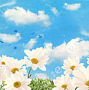 Summer Daisies Poster by Amanda Elwell