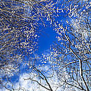 Winter Trees And Blue Sky Poster by Elena Elisseeva