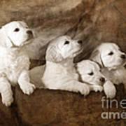 Vintage Festive Puppies Poster by Angel  Tarantella