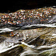 Williams River Autumn Poster by Thomas R Fletcher
